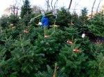 В Нью-Йорке угнали трейлер с рождественскимиелками
